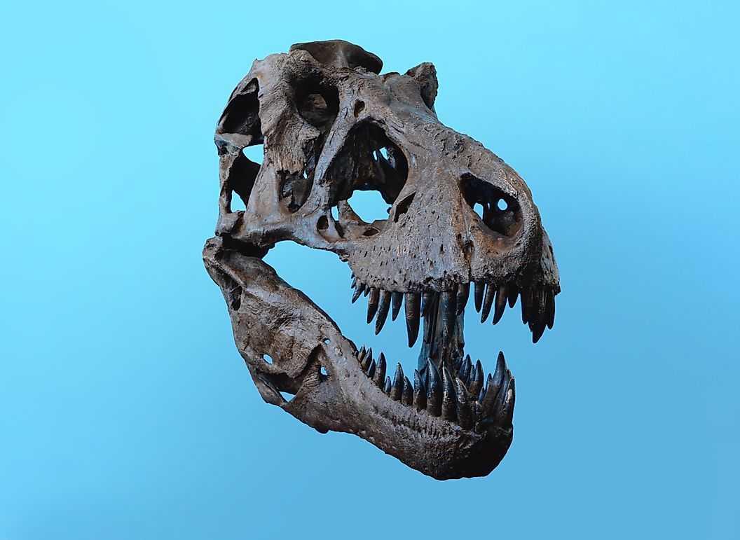 Интеллект динозавров