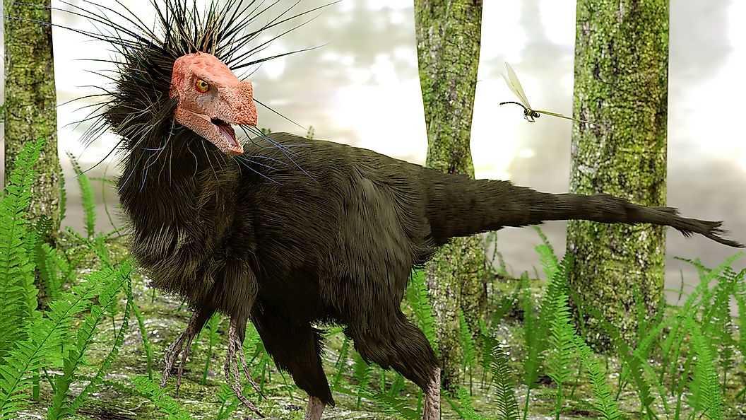 У динозавров были перья