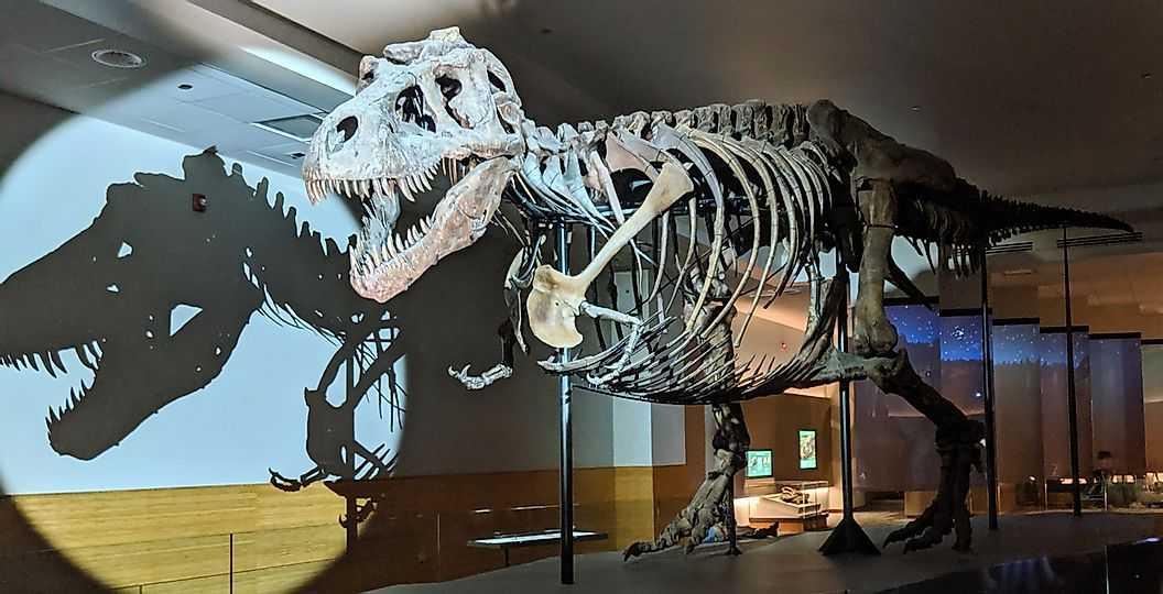 Динозавры жили повсюду