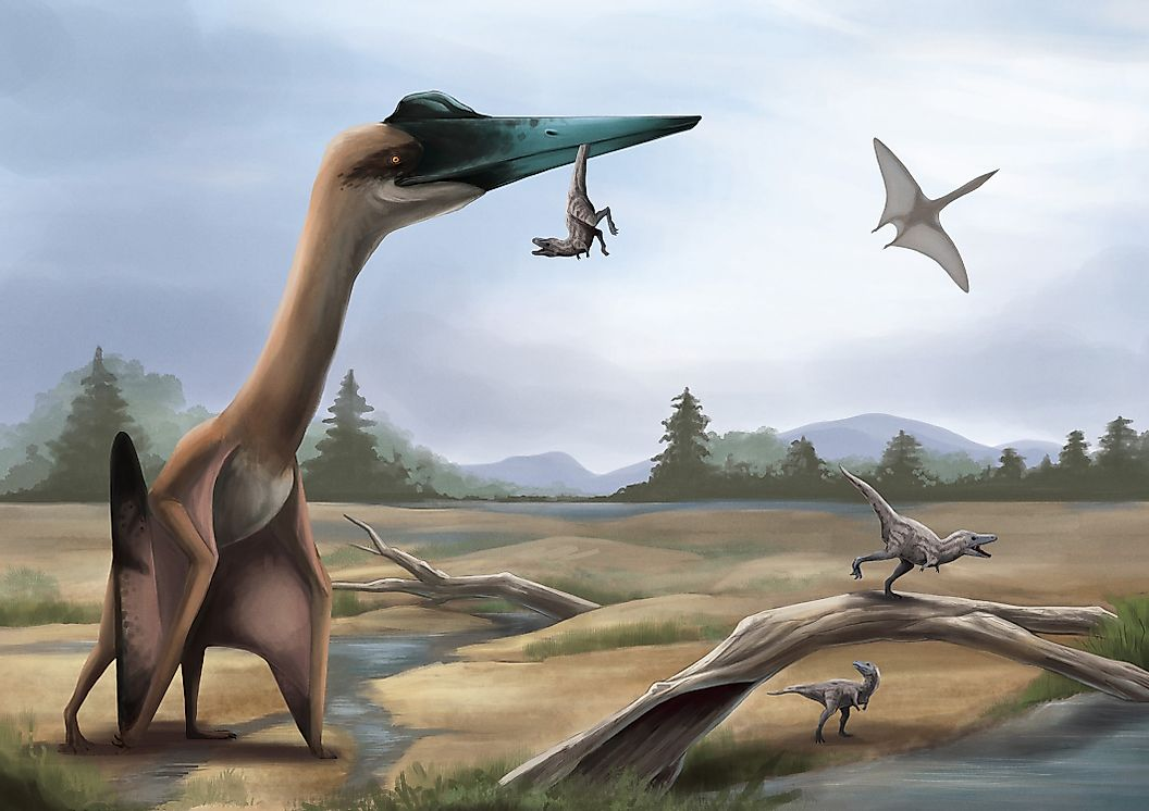 Некоторые летающие динозавры были огромными