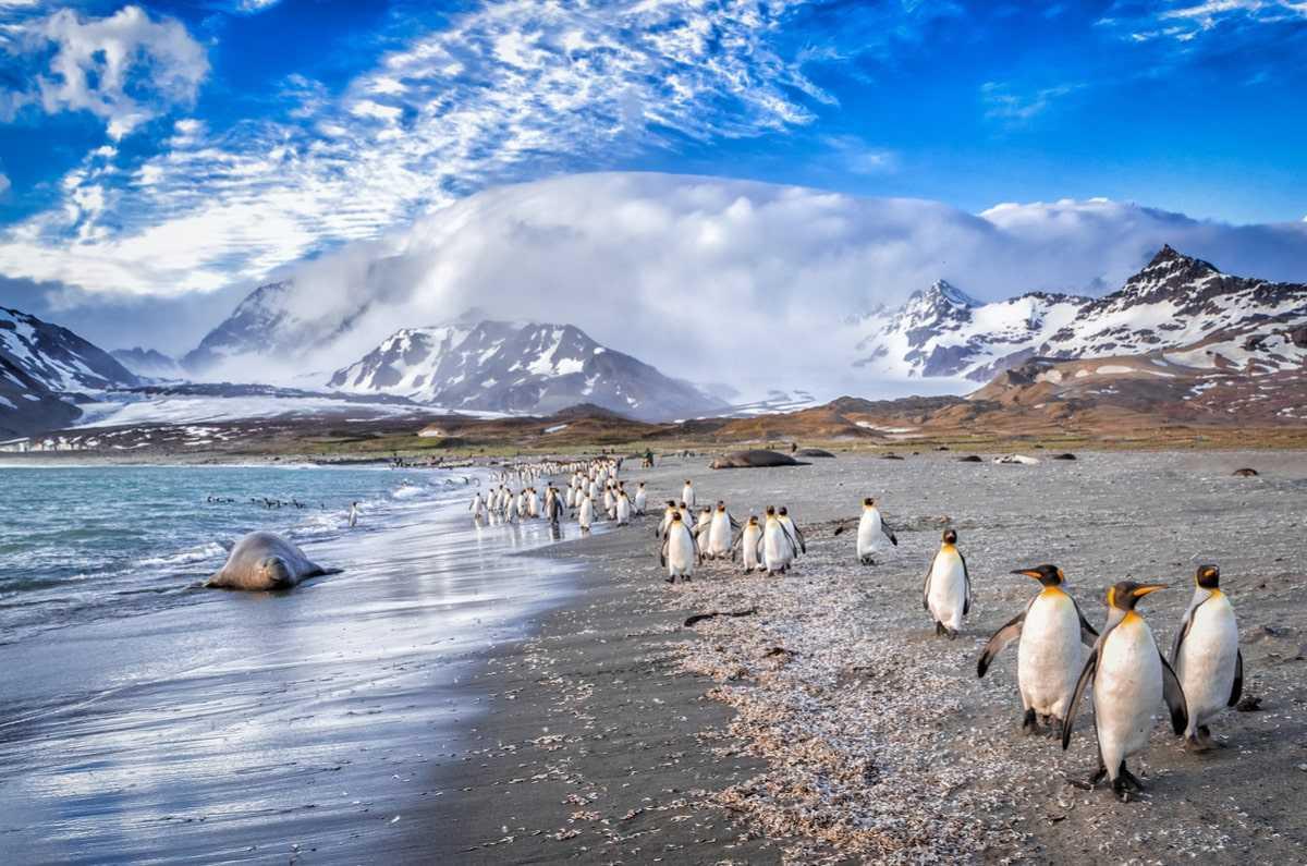 Достопримечательности Фолклендских островов