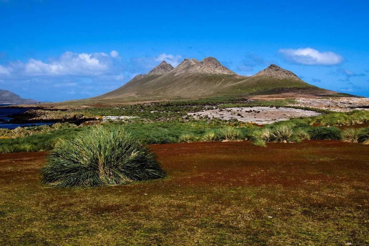 Природа Фолклендских островов
