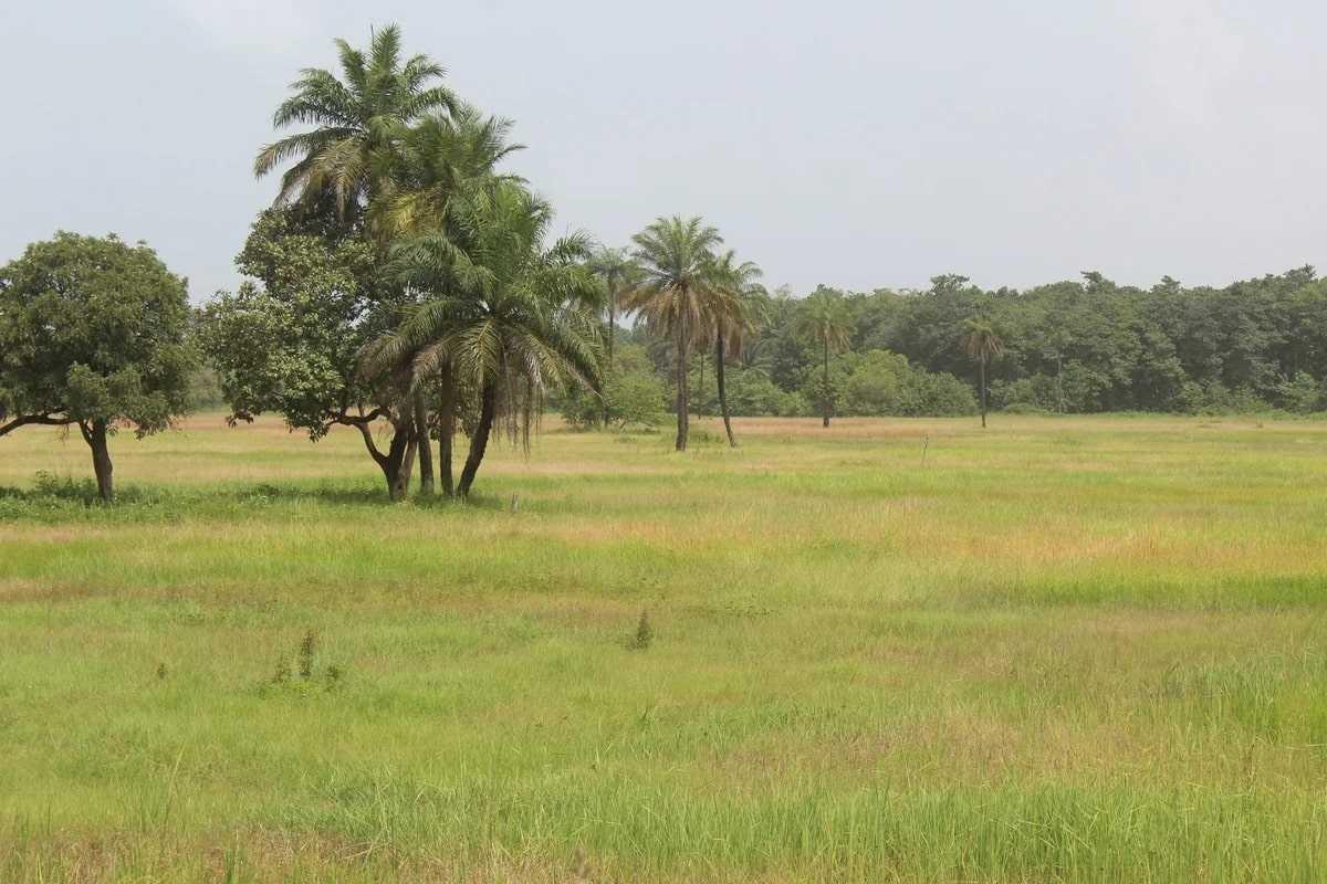 Природа Гвинеи-Бисау