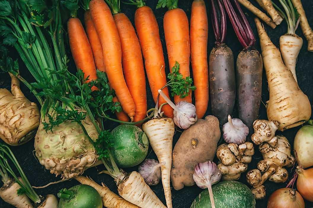 Как растения делают еду?