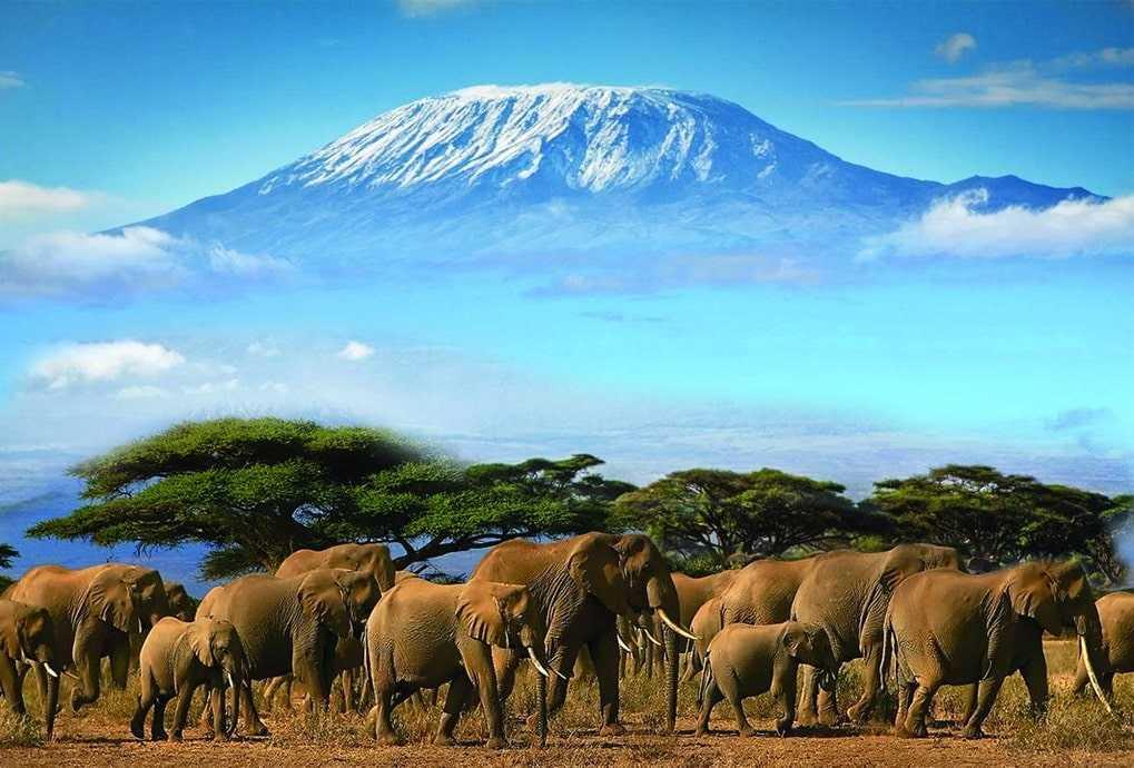 Парк Амбосели, Кения