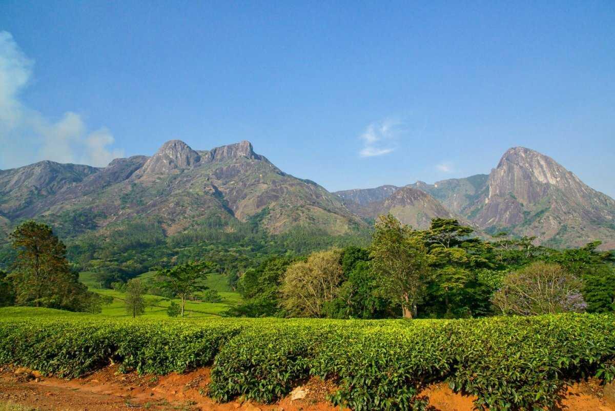 Малави природа