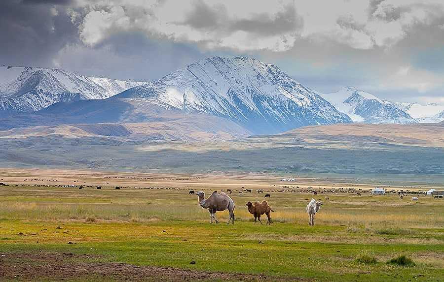 Монголия природа