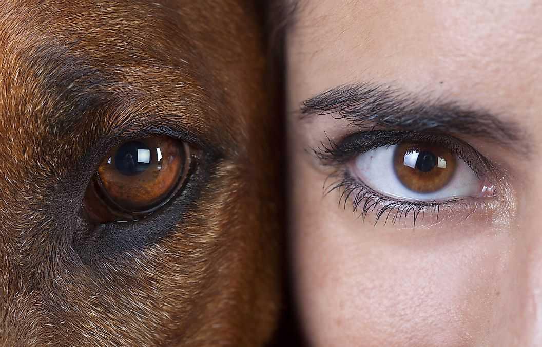 Удивительные факты о человеческом глазе
