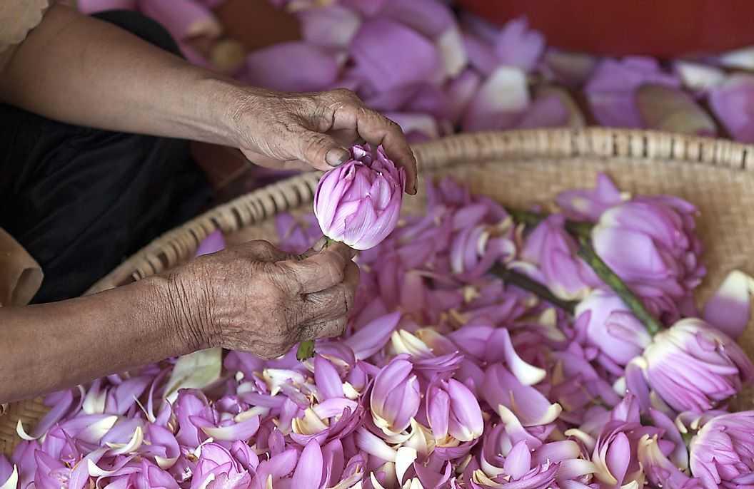 Страны в которых выращивают чай